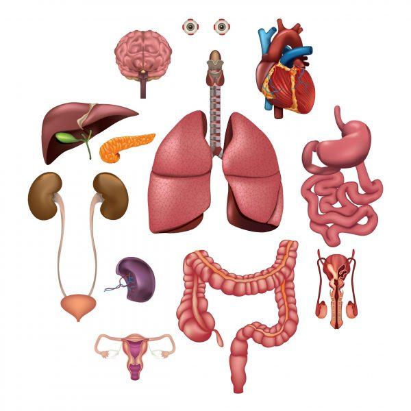 Diabetes and organs